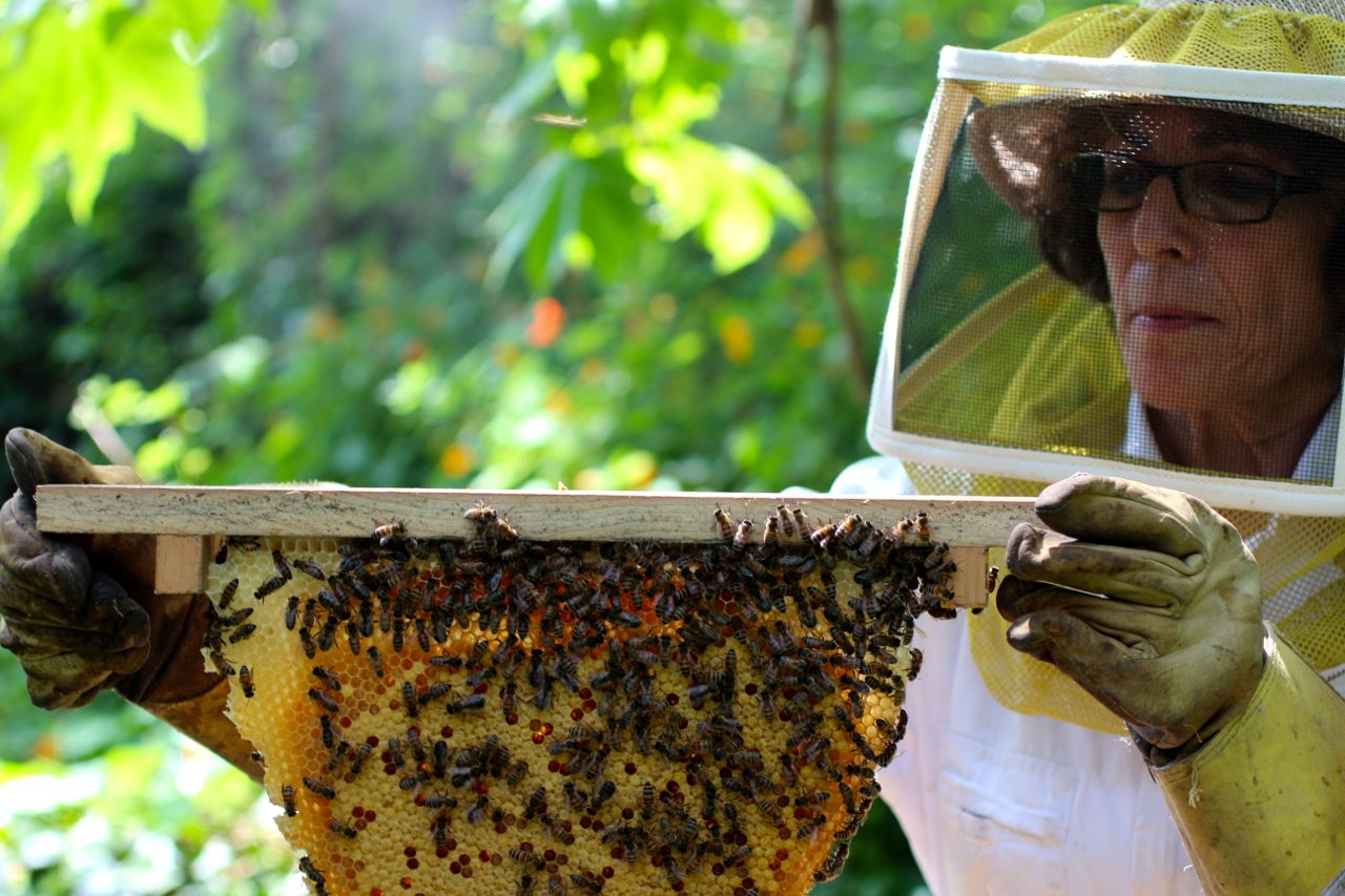 queen of hearts saving and protecting honey bees the local rose