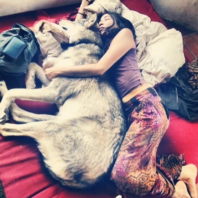 saving wolves, shiva rose