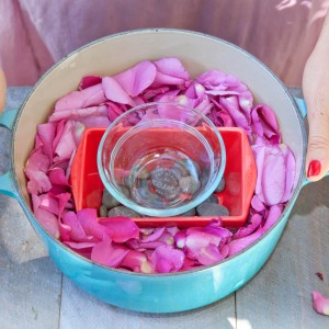 Making rose water, DIY rose water toner, The Local Rose, Shiva Rose