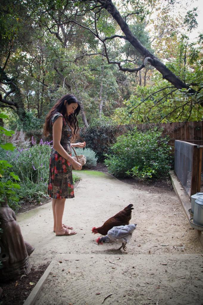 raising chickens, shiva rose